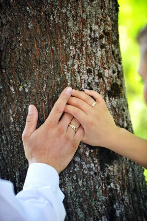 bride and groom hands on  trunk of  tree close up Stock Photo - 10133705