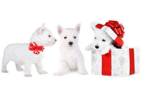 Amusing   white puppys on whitebackground