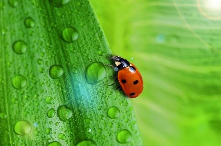 helder groen blad en waterdruppel close up Stockfoto