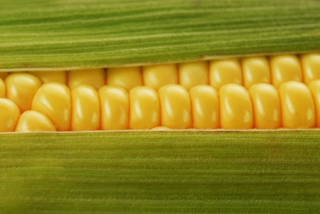 corn kernel: corn cob between green leaves