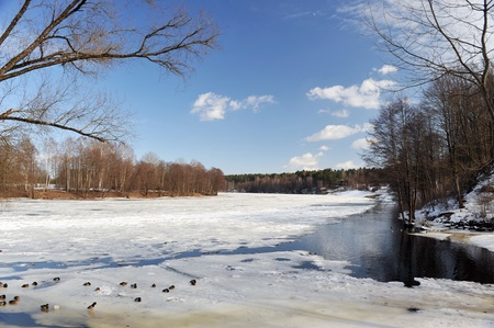 Trees and bushes on bank of snow covered river. winter landscape photo