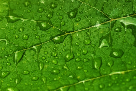 close up: green leaf with water drops close up Stock Photo