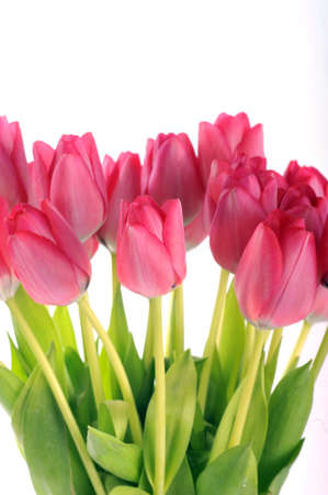 bouquet of many red tulips Stock Photo - 17561003