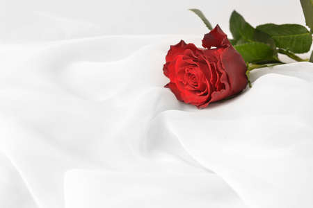 single rose: red rose on white silk isolated