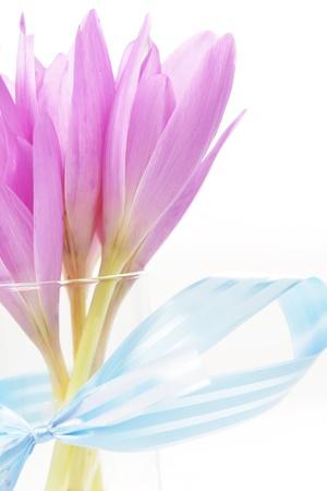 blossom time:  bouquet of  purple crocus flower. blossom time Stock Photo