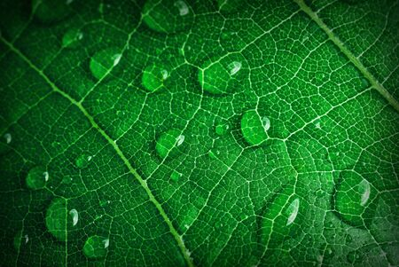 green leaf with water drops close up photo