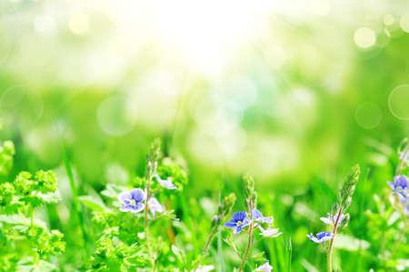flowers blooming in spring farm field photo