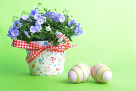 blue campanula flowers  and easter eggs on green background photo