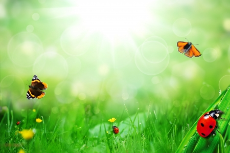 on the foreground: sunny green field with ladybugs and butterfly Stock Photo