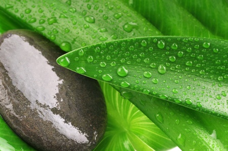 green leaf,grey stone and water drop close up photo