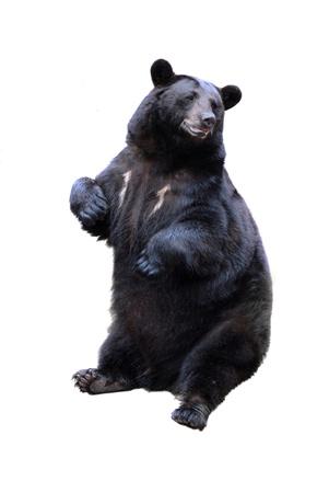 검은 곰은 흰색에 고립