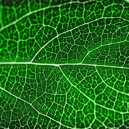 going green: textured green leaf close up Stock Photo