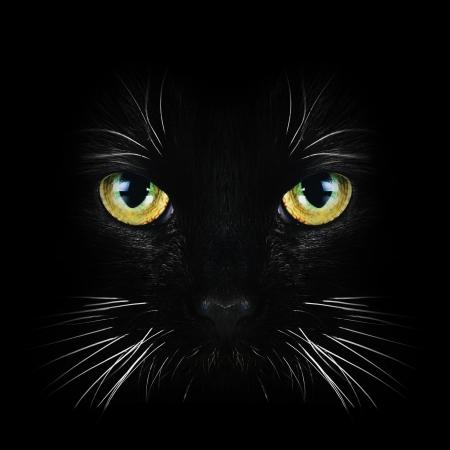 검은 고양이의 초상화를 닫습니다 스톡 콘텐츠