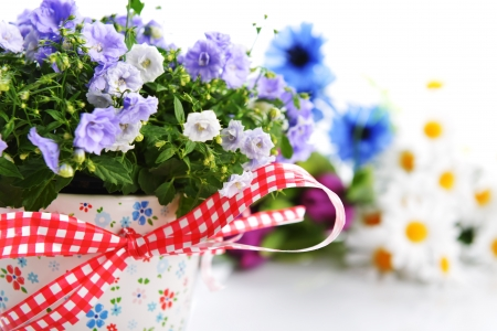 blue campanula flowers in  flower pot and other flowers photo