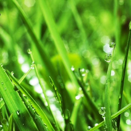 fresh green grass with water drops close up photo