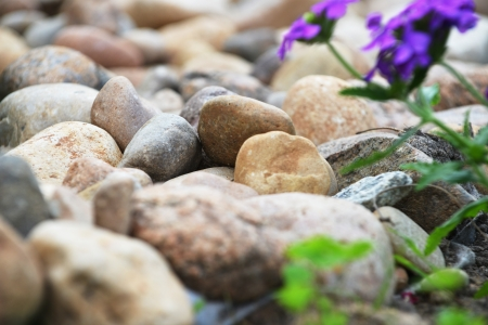 backyard decorated with different stones and purple flowers photo