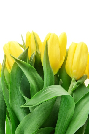 blosom: bouquet of fresh yellow tulips in vase