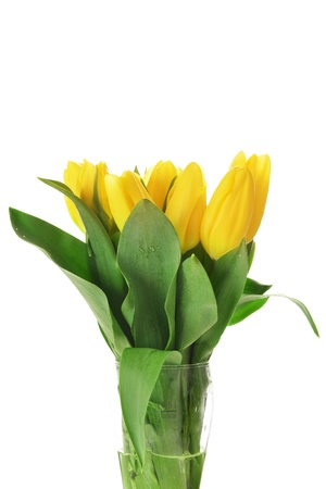 blosom: bouquet of fresh yellow tulips in glass vase Stock Photo