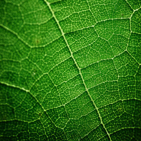 textured green leaf close up photo