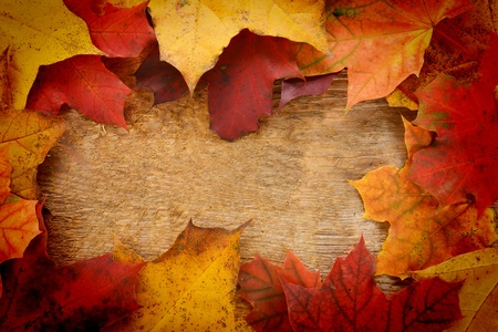 Autumn  colorful leaves  of maple over wooden background photo