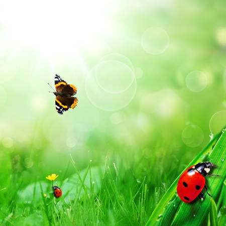 sunny green field with ladybugs and butterfly photo