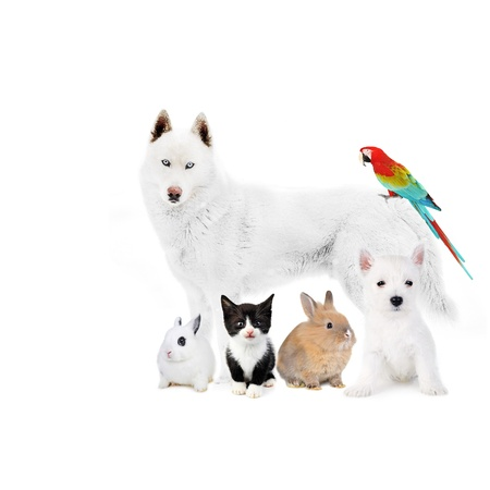 Dogs,cat, bird, rabbits - in front of a white photo