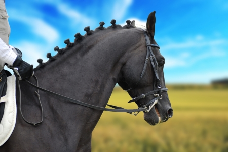 black beautiful horse with rider outdoor photo