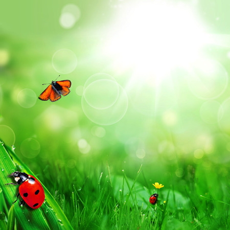 forest background: sunny green field with ladybugs and butterfly Stock Photo