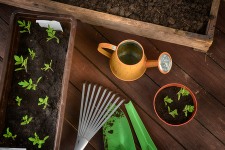 Gardening tools, plants and soil on  wooden table. photo