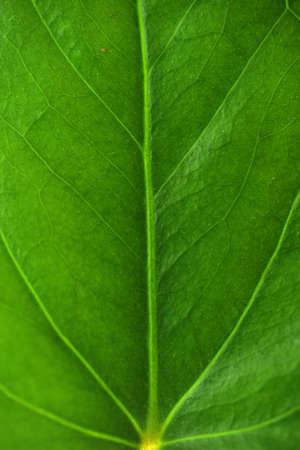 houseplants: fresh green leaf of houseplants Stock Photo