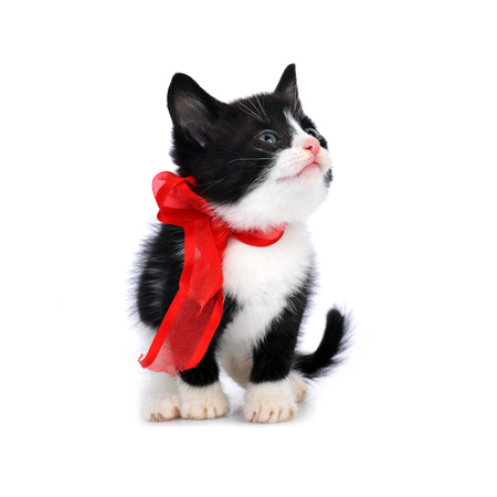 beautiful small kitten isolated on white photo