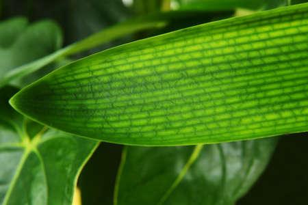 houseplants: fresh green leaves of houseplants