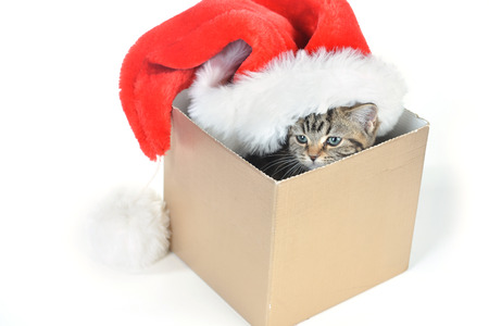 Funny kitten with santa claus hat in gift box photo