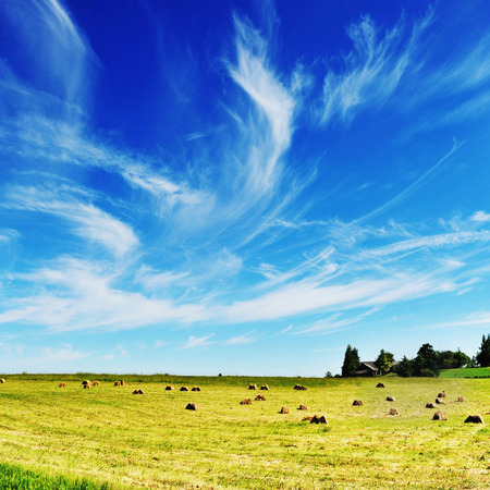 Harvesting hay.summer field of hay bales photo