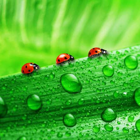 lady bug: lady bug Stock Photo