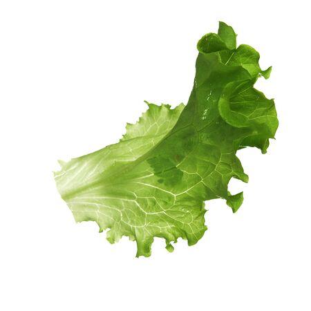 lettuces: leaf fresh lettuce isolated on white background