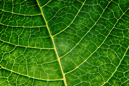 bright green leaf close up, texture
