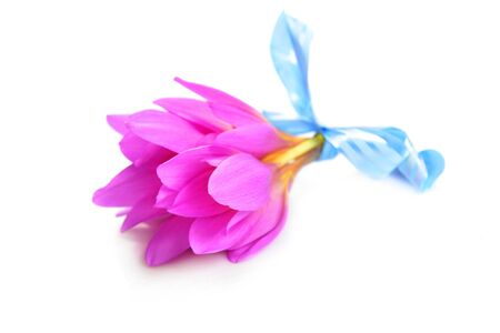 blossom time: bouquet of  purple crocus flower. blossom time