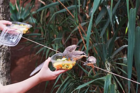 gray tropical birds eat  food from boxes