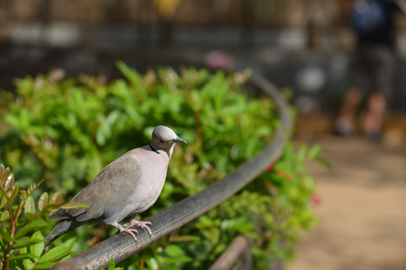 gray tropical bird sitting on fence in park