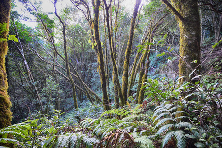 trees, grass and fern forest in mountain magic forest