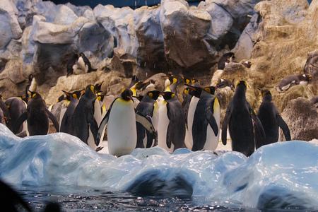 Group of cute penguins in  zoo.
