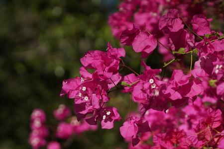 flowering bush branch of tropical plants