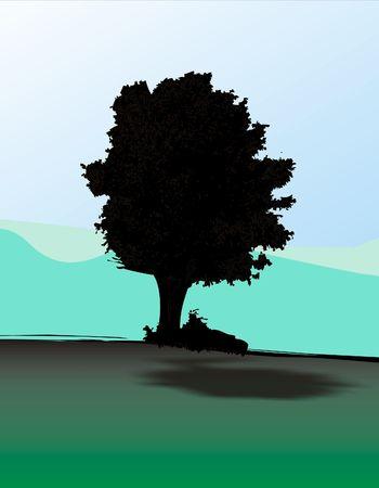 oaken: Lonely oak tree Stock Photo