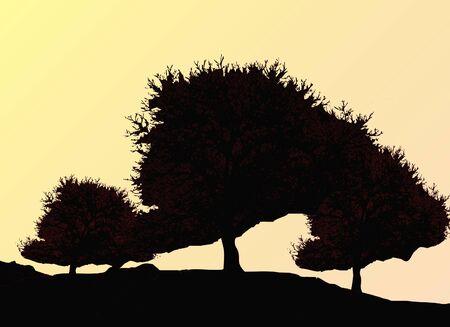 Silhouette of oak tree in autumn photo