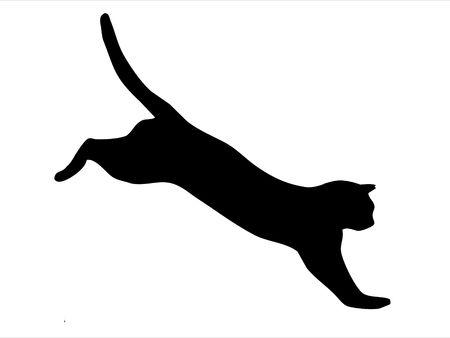 Silhouette of wild cat photo