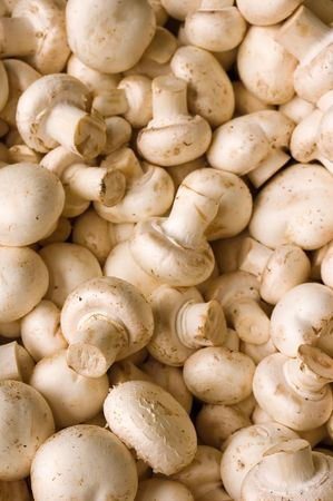 champignons: A lot of mushrooms, champignons for eating, etc, pizza