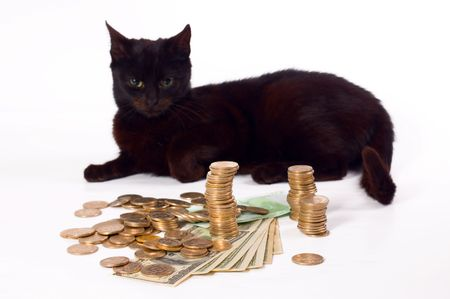 Black cat like guard of money, focus on midlle of money