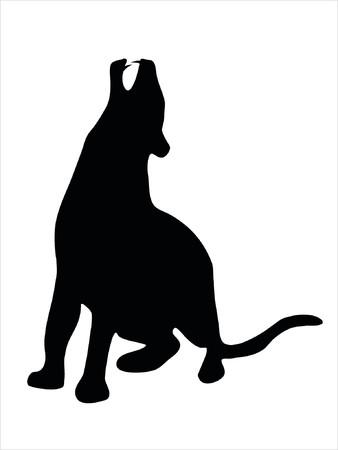 puma: Illustrazione di animali selvatici, la famiglia di gatti  Vettoriali