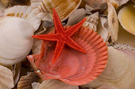 Fondos de diferentes tipos de conchas de mar  Foto de archivo - 2474904